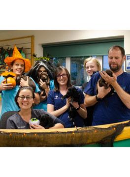 Halloween team at Filham Park Vets